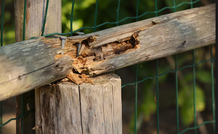 deteriorating wood fence